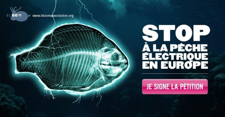 2017 11 25 bloom peche electrique petition