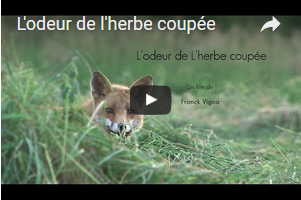 2015 11 odeur herbe coupee video